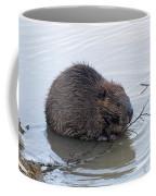 Beaver Chewing On Twig Coffee Mug