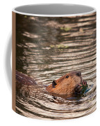Beaver Feeding Coffee Mug