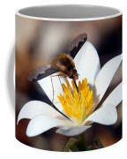 Bee Fly And Bloodroot Coffee Mug