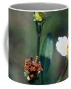 Bee- Nectar Coffee Mug
