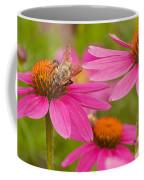 Bee On Coneflower Coffee Mug