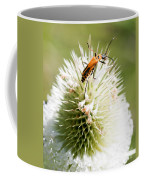 Beetle On White Spiky Wild Flower Coffee Mug