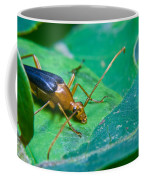 Beetle Sneeking Around Coffee Mug