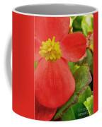 Begonia Volumia Coffee Mug