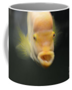 Belle Isle Aquarium Fish 2 Coffee Mug