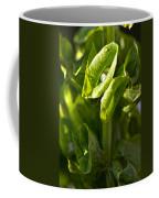 Bells Of Ireland Plant Coffee Mug