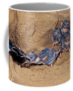 Belted Kingfisher Feeds Young Coffee Mug