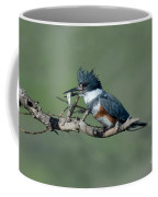 Belted Kingfisher Hen With Fish Coffee Mug