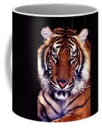 Bengal Tiger Eye To Eye Coffee Mug