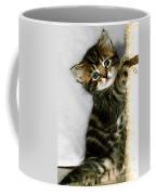 Benny The Kitten Playing Coffee Mug