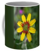 Berlandiera Lyrata Coffee Mug