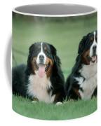 Bernese Mountain Dogs Coffee Mug