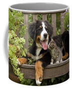 Bernese Mountain Puppy & Kitten Coffee Mug