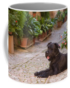 Big Black Schnauzer Dog In Italy Coffee Mug
