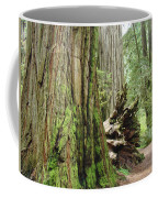 Big California Redwood Tree Forest Art Prints Coffee Mug