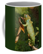 big chameleon of Madagascar 20 Coffee Mug