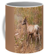 Big Horn Sheep Ewe Coffee Mug