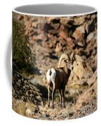 Bighorn Stare Coffee Mug