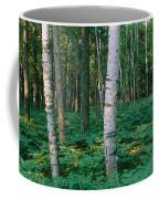 Birch Trees In A Forest Coffee Mug