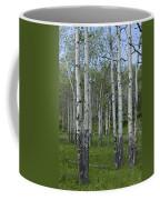 Birch Trees In A Grove No. 0148 Coffee Mug