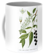 Bird Cherry Cerasus Padus Or Prunus Padus Coffee Mug