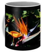 Grotto Bay Bird Of Paradise # 1 Coffee Mug