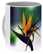 Bird Of Paradise Flower - Square Coffee Mug