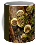 Birds Nest Fungi Coffee Mug
