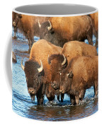 Bison Family In The Lamar River In Yellowstone National Park Coffee Mug