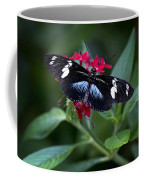 Black And Blue Butterfly Coffee Mug