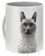 Black And White Siamese Cat Coffee Mug