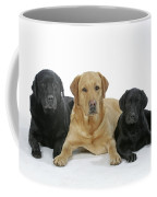 Black And Yellow Labradors With Puppy Coffee Mug