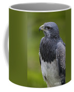 Black-chested Buzzard-eagle Coffee Mug