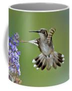 Black-chinned Hummingbird Coffee Mug