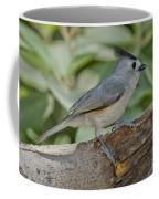 Black-crested Titmouse Coffee Mug