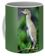 Black-crowned Night Heron Juvenile Coffee Mug