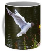 Black Head Gull - Preparing For Landing Coffee Mug