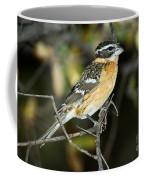 Black-headed Grosbeak Female Coffee Mug
