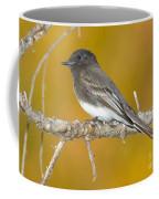 Black Phoebe Sayornis Nigricans Coffee Mug