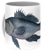 Black Sea Bass 3 Coffee Mug