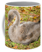 Black Swan Cygnet Coffee Mug