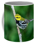 Black-throated Green Warbler, Male Coffee Mug