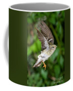 Blackpoll Warbler Coffee Mug
