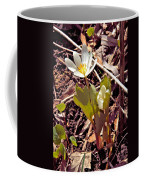Bloodroot Reaching For The Spring Sun Coffee Mug