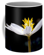 Bloodroot Coffee Mug by Steven Ralser