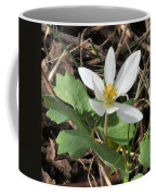 Bloodroot Coffee Mug