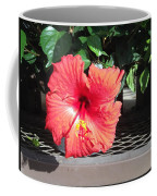 Bloom Where Planted Coffee Mug