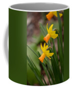 Blooming Daffodils Coffee Mug