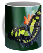 Blooms And Butterfly5c Coffee Mug