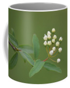 Blossoming Spirea Buds Coffee Mug